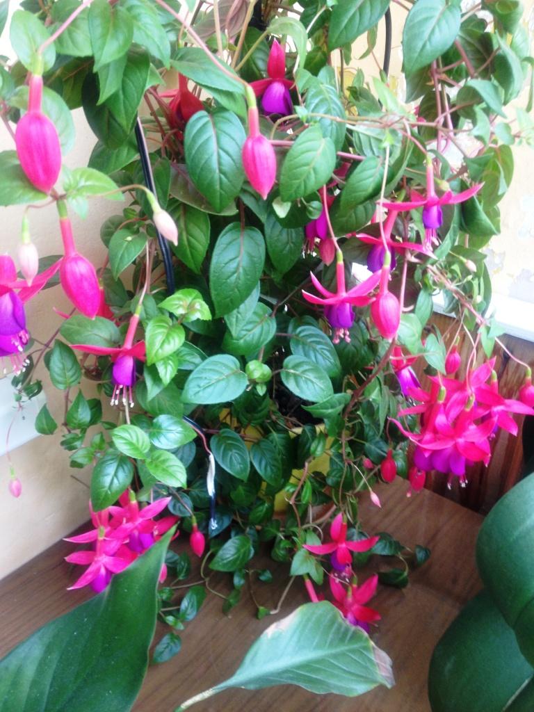 Фото домашних растений с цветами с названиями